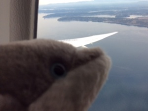 Dolphie looks at the window overlooking his first destination, Japan.