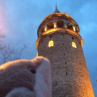 Istanbul - Galata Tower Dolphie
